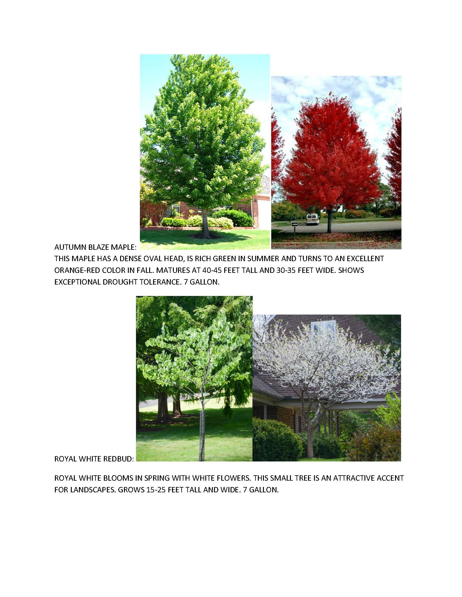 2020 FALL TREES_Page_2